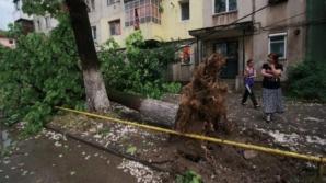 Dezastru în urma furtunilor: copaci smulşi de vânt, zeci de locuinţe şi curţi inundate