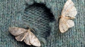 Metode eficiente prin care poţi scapa de molii. Nu se vor mai întoarce la tine acasă