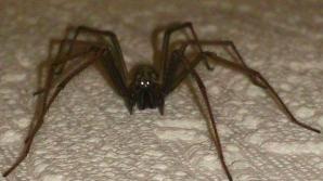 De ce nu este bine să omori păianjenii