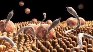 Mare atenție! Acestea sunt simptomele infecţiei cu paraziţi intestinali