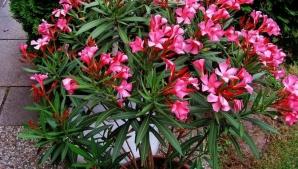 Plantele care cresc în România şi care te pot omorî rapid