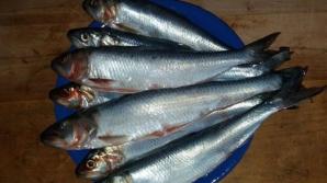 Acest peşte miraculos îţi curăţă vasele de sânge de colesterol