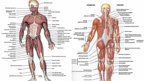 Subiecte Anatomie BAC 2018