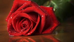 Ce înseamnă când primeşti un trandafir roşu? Dar când primeşti zece? Semnificaţia fiecărui gest