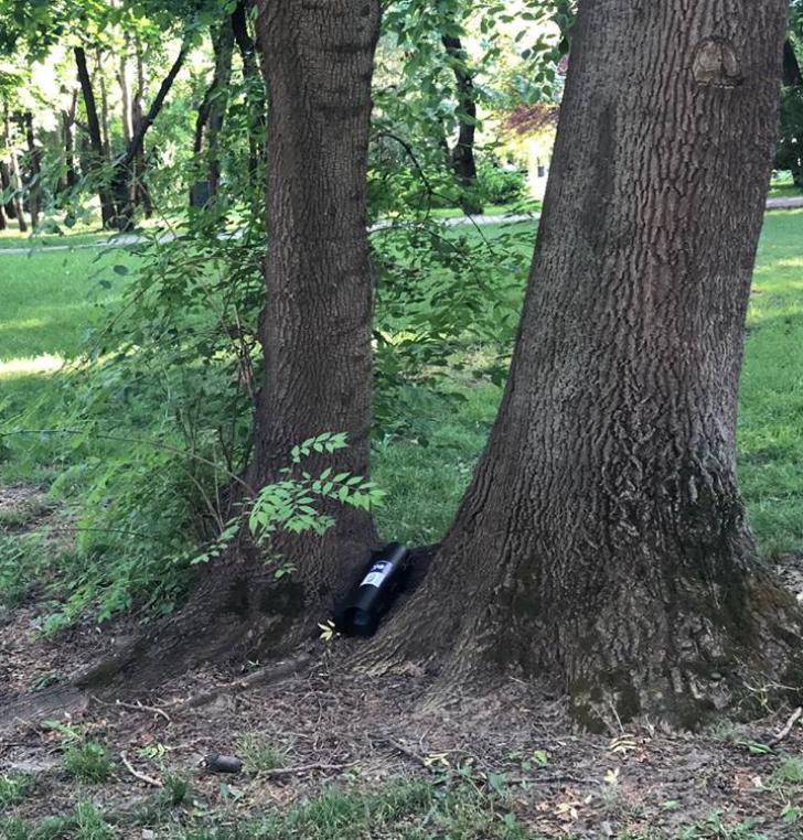 Otravă aruncată în parcuri din Capitală, Gabriela Firea caută vinovaţii
