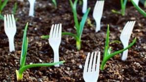 A înfipt furculiţe de plastic în grădină! Motivul este genial! Uite de ce!