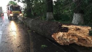 DEZASTRU după furtună. Zeci de copaci smulşi de vijelie, într-o localitate din Vâlcea