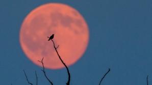 Eclipsă de lună. 6 zodii care vor fi cel mai puţin afectate de Luna sângerie din 27 iulie