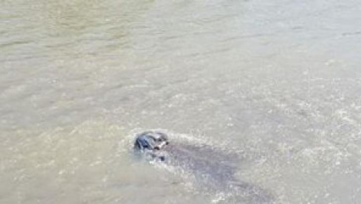 Tragedie în Vaslui: Doi copii s-au înecat într-un canal