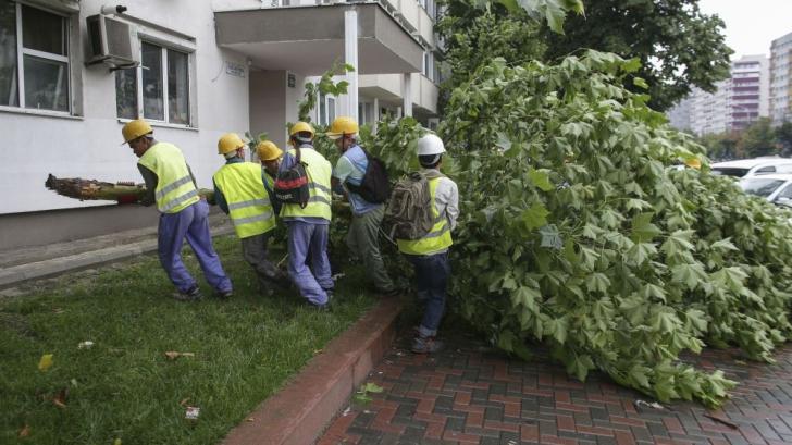 Copac doborât de furtună