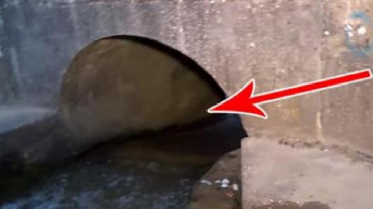 A auzit zgomote venind din tunel și s-a apropiat speriat. Erau vii!