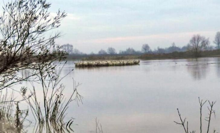 Peste 1.800 de animale şi 23 de ciobani, salvaţi din calea apelor