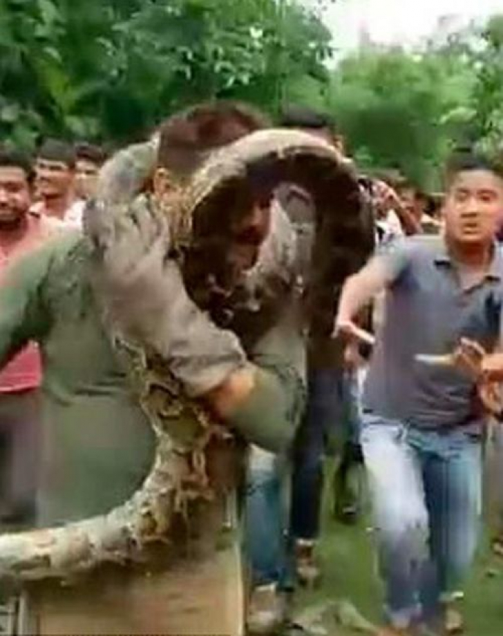 Un piton, aproape de a gâtui un bărbat în India