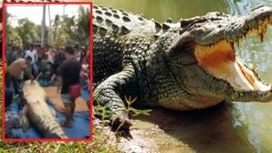 """Descoperire înfiorătoare în burta unui crocodil de 7 metri! """"Nici în cele mai negre vise..."""""""