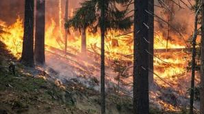 INCENDIU de vegetaţie şi în România. Pompierii intervin în forţă