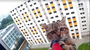 ATENŢIE! Ce trebuie să faci atunci când animalul de companie a căzut de la înălțime