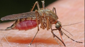 Cum să ţii insectele la distanţă. Trucuri spectaculoase
