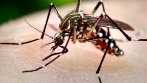 Atenţie la ţânţari! 23 de cazuri de infecţie cu virusul West Nile în România. O persoană a murit