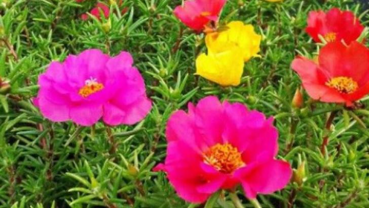 Le calci în picioare, dar îţi pot salva viaţa! Aceste plante vindecă tumorile, hepatita şi ciroza