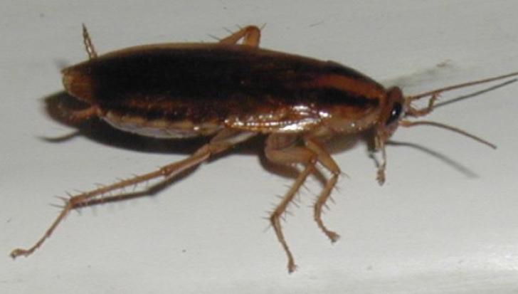10 greșeli care atrag gândacii în casa ta