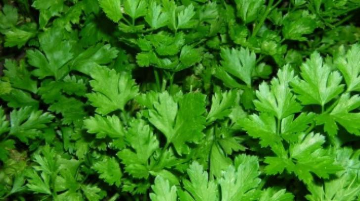 Plante aromatice pe care le poţi creşte în casă. Este uimitor ce poţi face cu ele