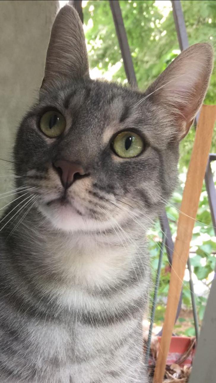 Ziua Internaţională a Pisicii. Tot ce trebuie să ştii dacă vrei o felină la tine acasă