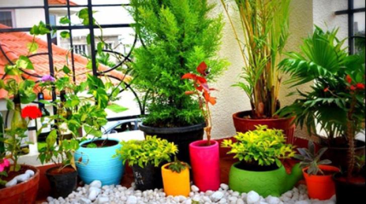 Plante care aduc ghinion