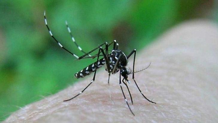 <p>Alertă în România, ca urmare a infecţiei cu virusul West Nile</p>