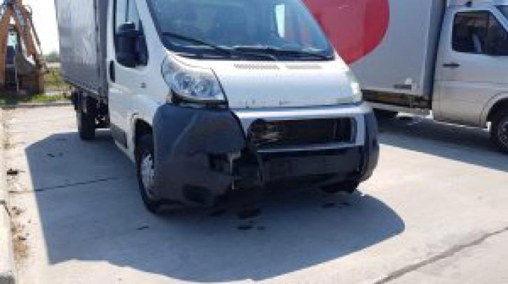 Accident pe A1. Un urs a fost lovit mortal de o camionetă. Ce spun autoritățile
