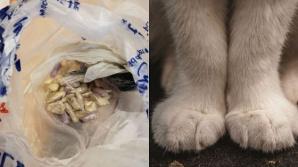 O pisică a adus acasă o pungă cu un conţinut neaşteptat. Proprietarul a chemat imediat poliţia
