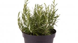 Plante aromatice pe care le poţi creşte în casă. Este extrem de simplu. Trucuri pe care nu le știai