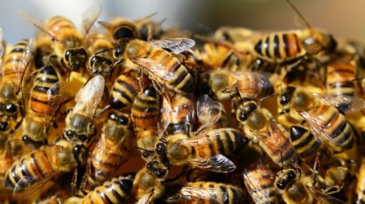 """""""Apocalipsa insectelor"""": Descoperirea făcută de oamenii de știință din Finlanda"""
