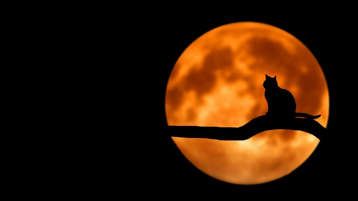 Luna Plina - Horoscop