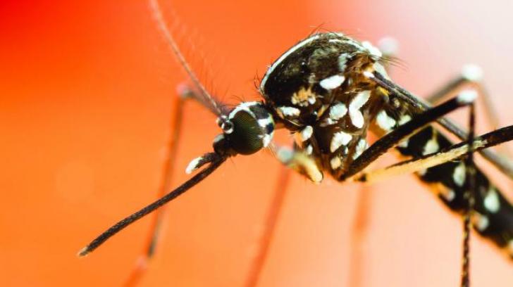Încă o victimă făcută de virusul West Nile în România. Bilanţul deceselor