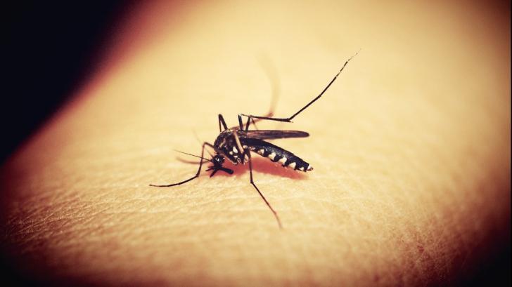 Țânțari purtători de virus West Nile, în Capitală