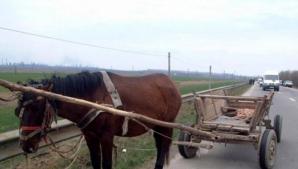 Pofta, bat-o vina! A furat un cal cu căruţă cu tot ca să meargă să mănânce mici la un târg