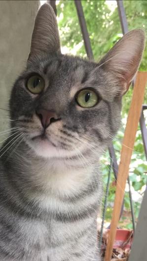 Pisica, detector al sănătăţii... mintale. Este ULUITOR