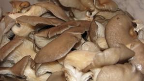 Ce sunt, de fapt, ciupercile PLEUROTUS. Se găsesc şi la noi în magazine. Mai cumperi?