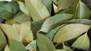 5 boli grave pe care le poţi trata cu frunze de dafin