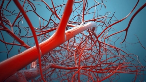 5 simptome ale arterelor înfundate. Urmările, catastrofale!