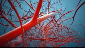3 alimente care previn formarea cheagurilor de sânge și mențin inima sănătoasă