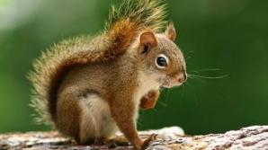 Motivul BIZAR pentru care o veveriţă a devenit celebritate: parcă e Pamela Anderson