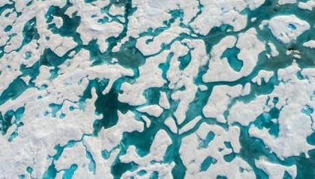 Neurologii au decis: cei care văd ursul de pe aceste calote glaciare au IQ-ul să reuşească în viaţă