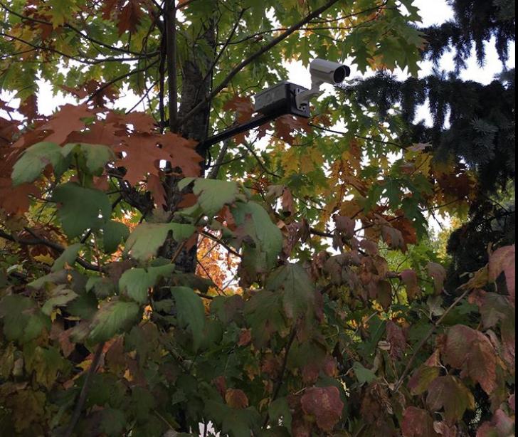 Copacii din conacul lui Dragnea, apăraţi de camere video