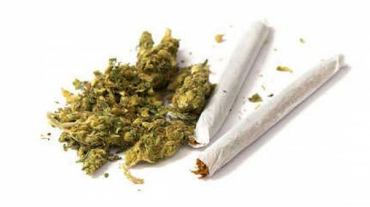 Canabisul, legalizat în scop medicinal