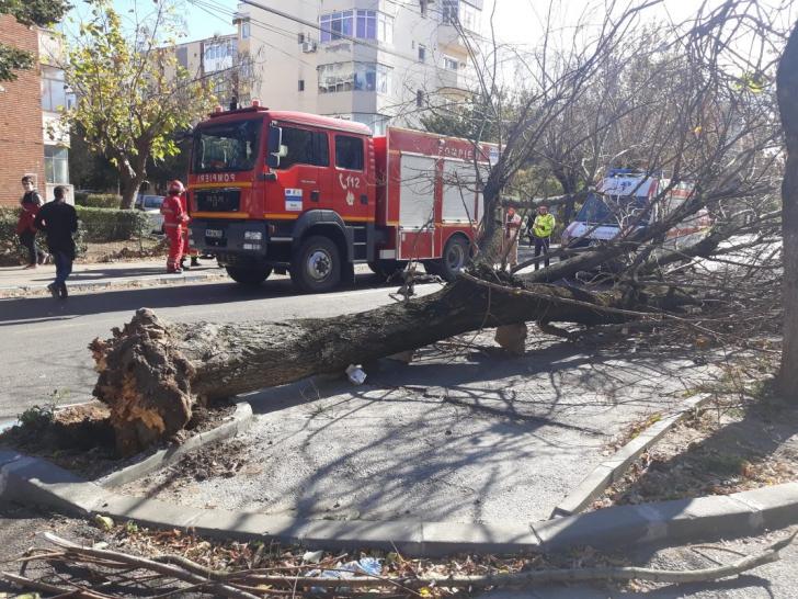 Vântul puternic face victime! O femeie a fost prinsă sub un copac doborât de vijelie