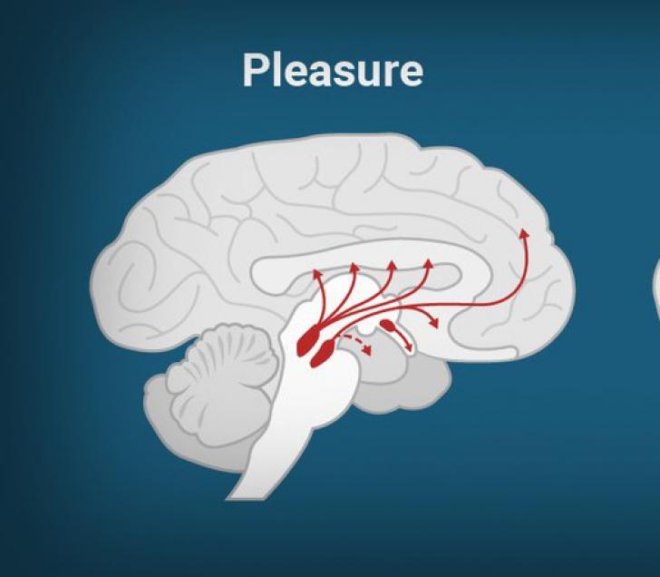 Ce poate produce la fel de multă plăcere ca un act sexual. Oricine poate face acest lucru