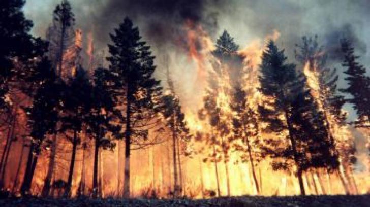 Incendiu de pădure în Masivul Făgăraş. Zeci de pompieri mobilizaţi