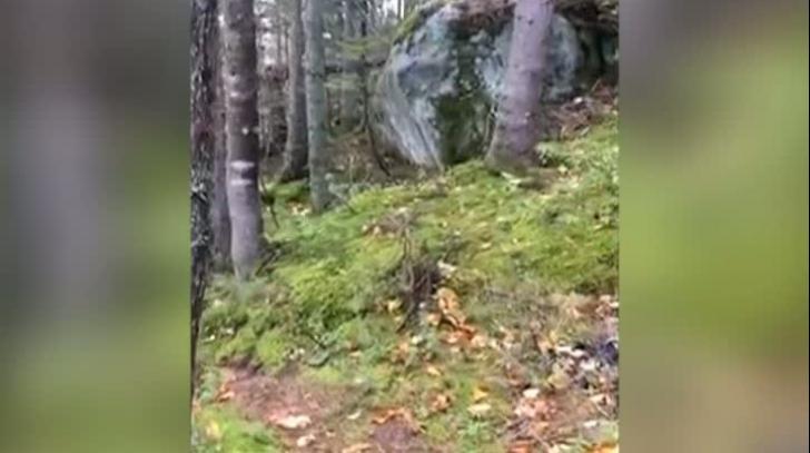 Fenomen incredibil într-o pădure: Pământul respiră! Imagini ireale