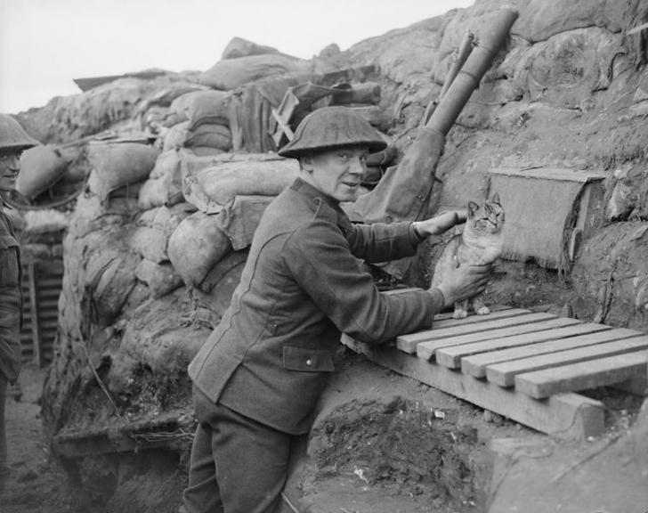 Ce rol au avut cele 500 000 de pisici trimise pe front, în Primul Război Mondial